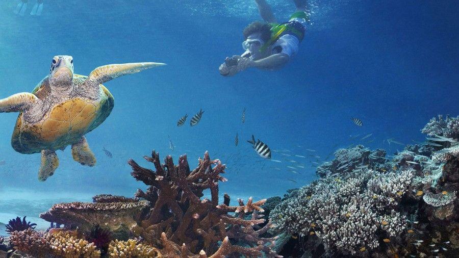 grande-barriera-corallina-australia3