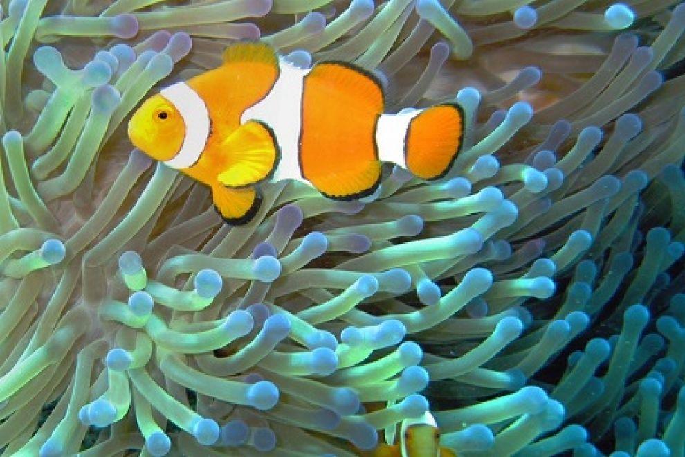 grande-barriera-corallina-australia5