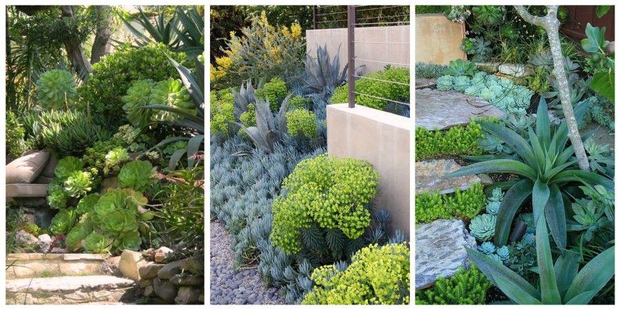 landscape succulents