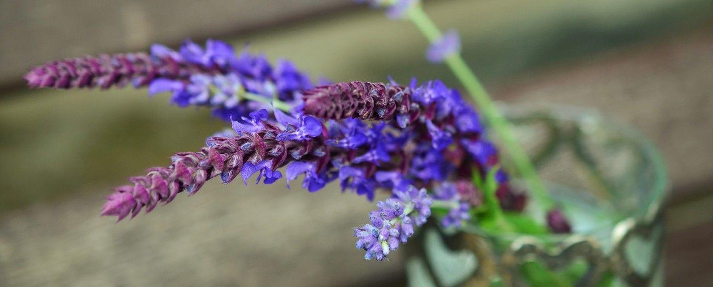 Le piante da tenere in camera per sonni tranquilli bigodino - Piante in camera ...
