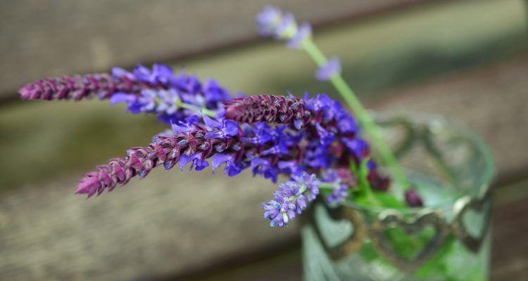 Le piante da tenere in camera per sonni tranquilli bigodino - Si possono tenere le piante in camera da letto ...