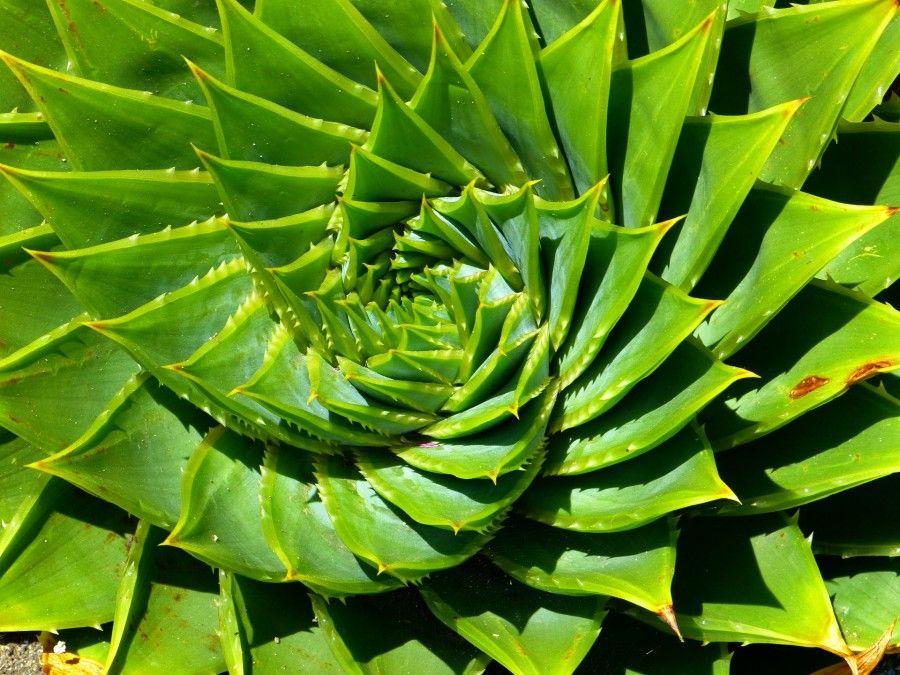 piante-dormire (2)
