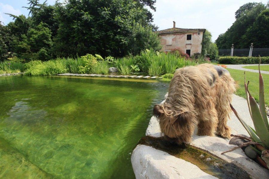 Ecolago e animali domestici