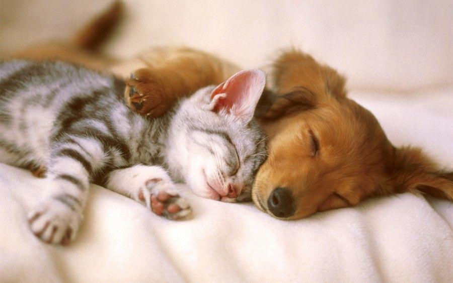 cane-gatto-stressati2