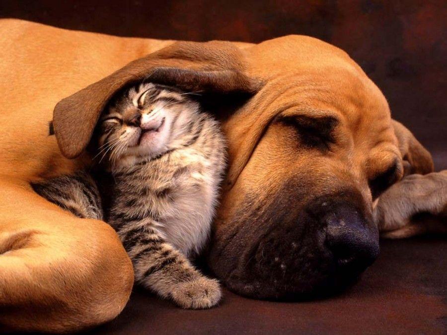 cane-gatto-stressati3
