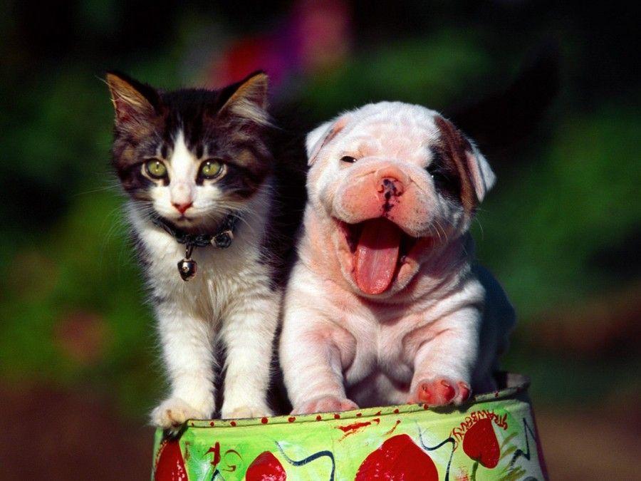 cane-gatto-stressati4