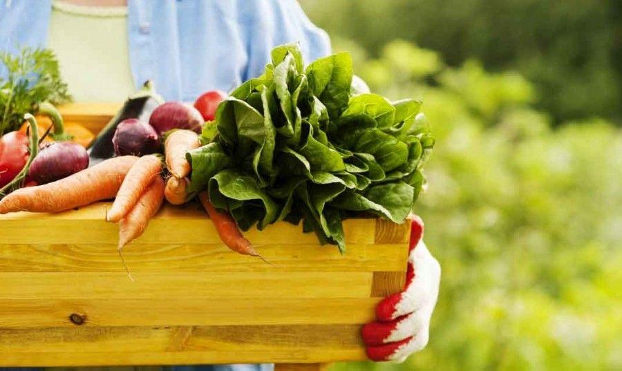 cibo-biologico4
