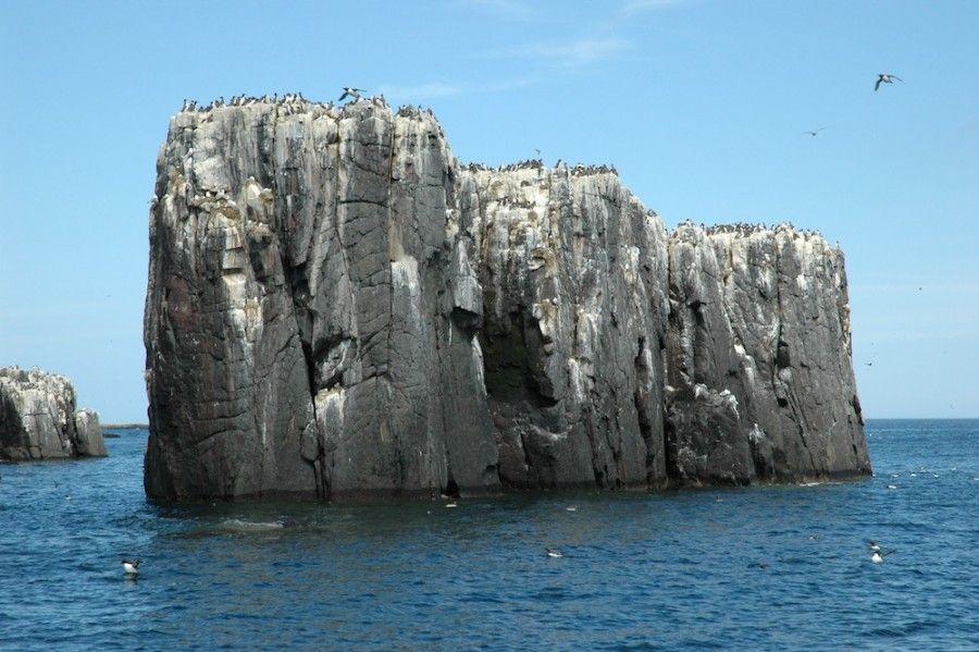 isole-inglesi-02-Farne Islands