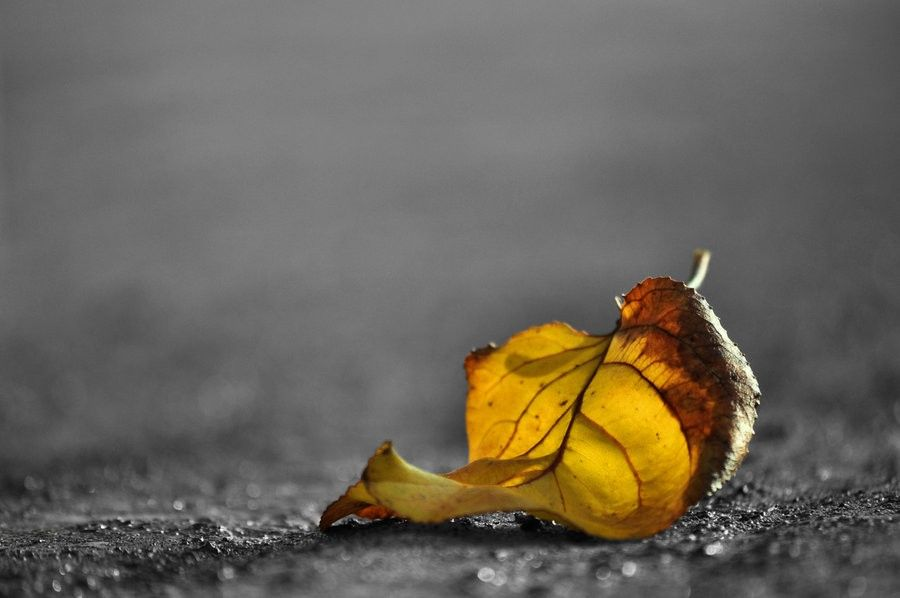 what_remains_of_grey_autumn____by_blackrugiada-d4g2d61