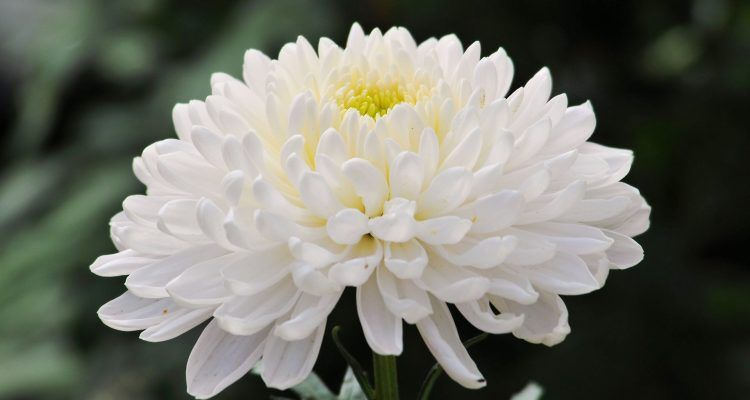 10 piante da tenere in casa per purificare l 39 aria bigodino - Le piante grasse si possono tenere in casa ...