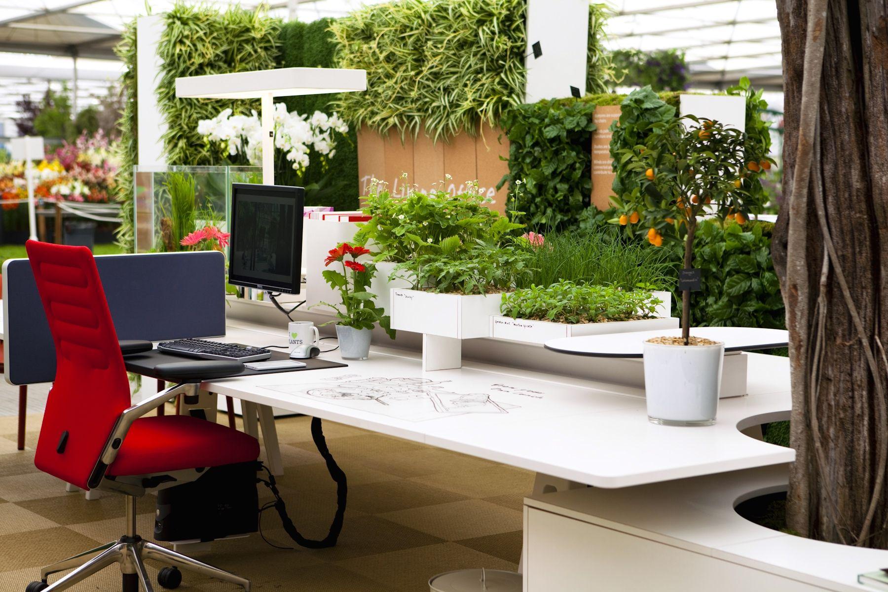 Ufficio Elegante Lungi : Come arredare lufficio con le piante bigodino