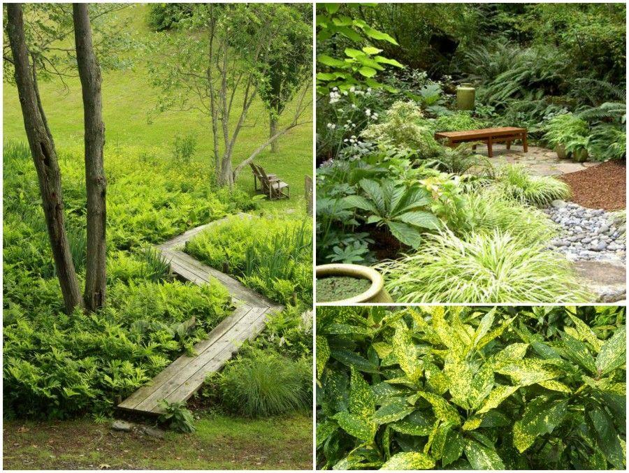 2 aucuba japonica ferns