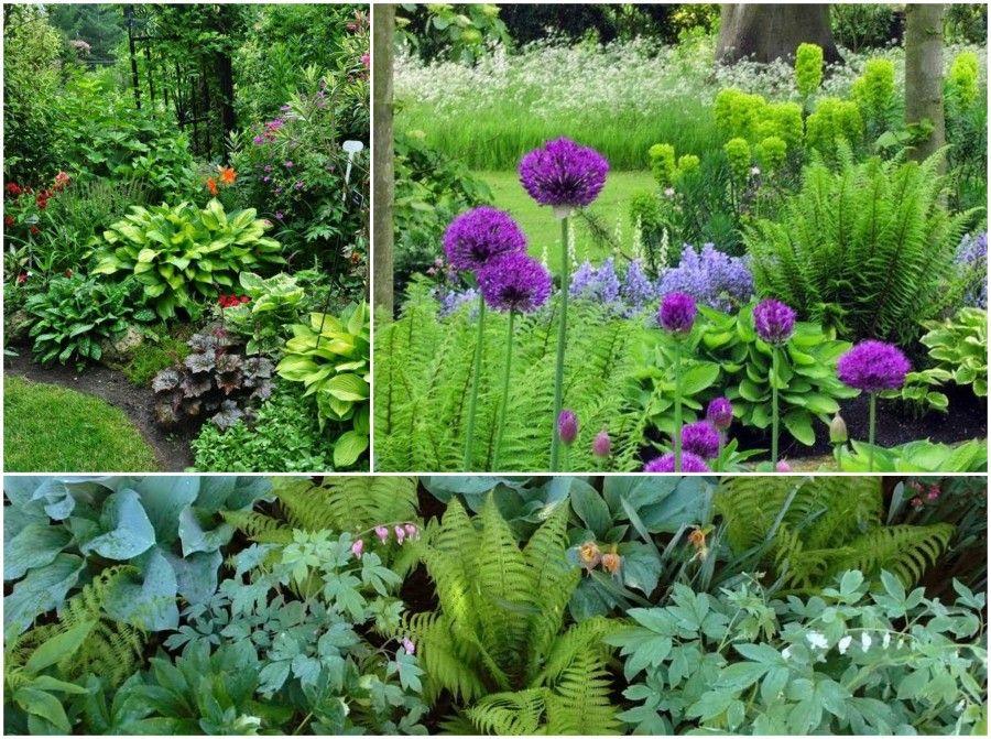 Quali piante scegliere se in giardino non batte il sole for Piante x aiuole