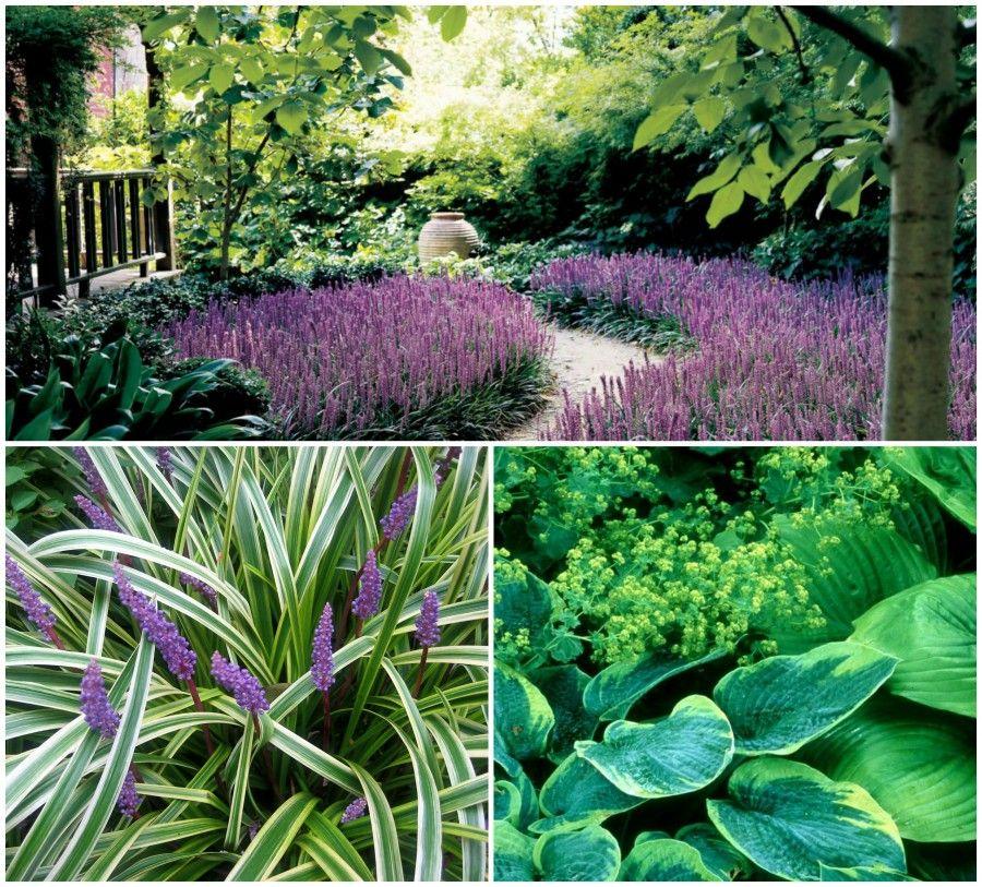 Quali piante scegliere se in giardino non batte il sole for Piante perenni da bordura