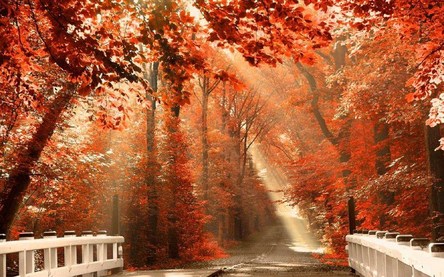 Sagre d'autunno da non perdere