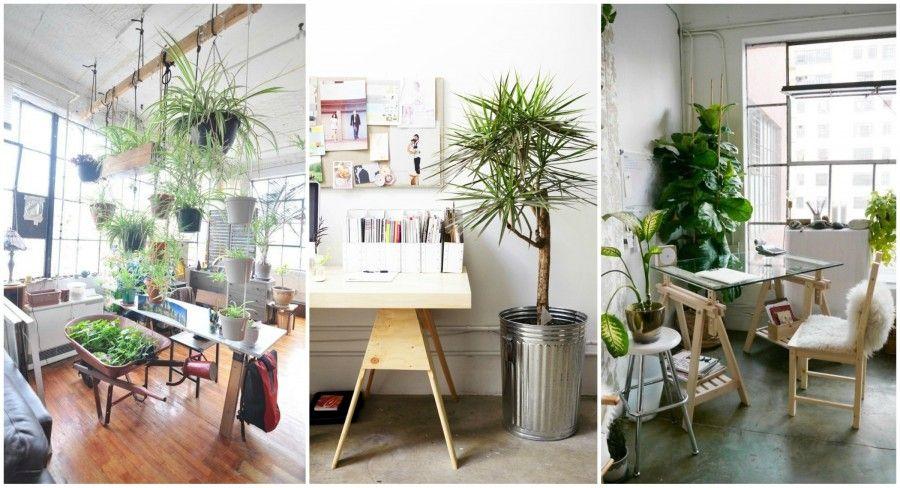 Come arredare l 39 ufficio con le piante bigodino - Arredare l ufficio ...