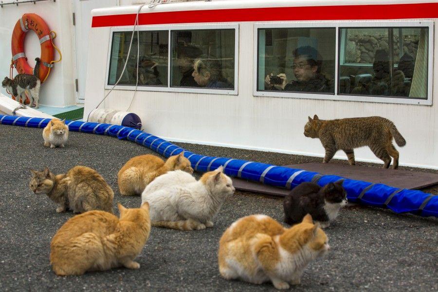 le-città-dei-gatti