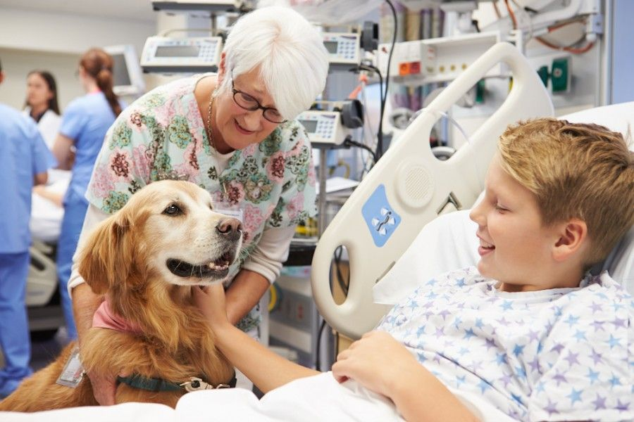 Therapy Dog Visiting Young Male Patient In Hospital