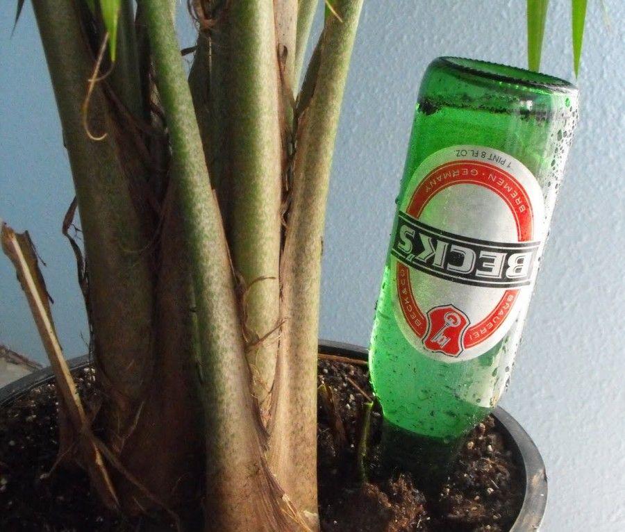 birra-piante