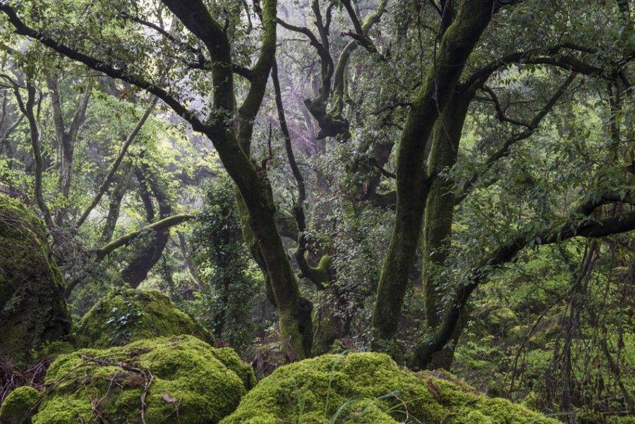 bosco di sasseto