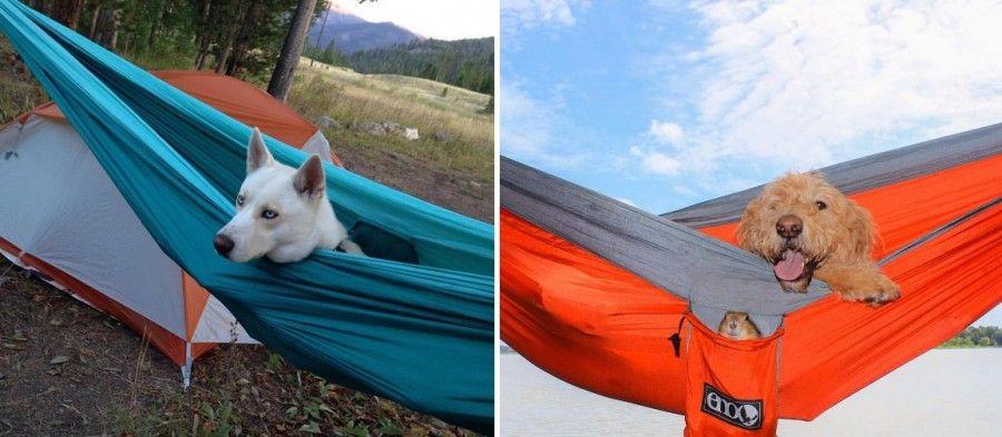 cani-in-campeggio-amaca