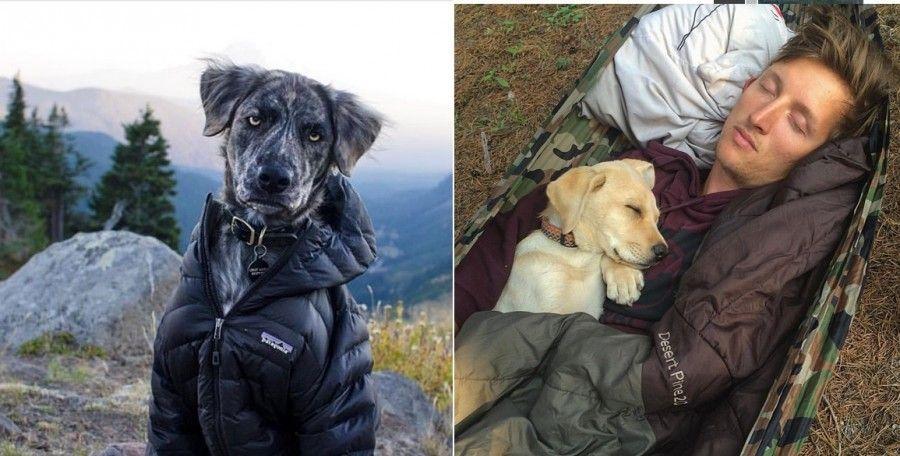 cani-in-campeggio-sacco