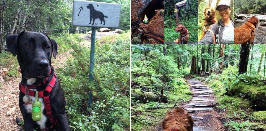 cani-in-campeggio-trekking