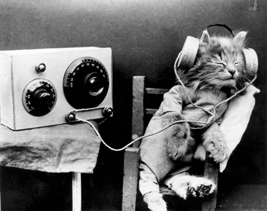 musica-per-cani-e-gatti