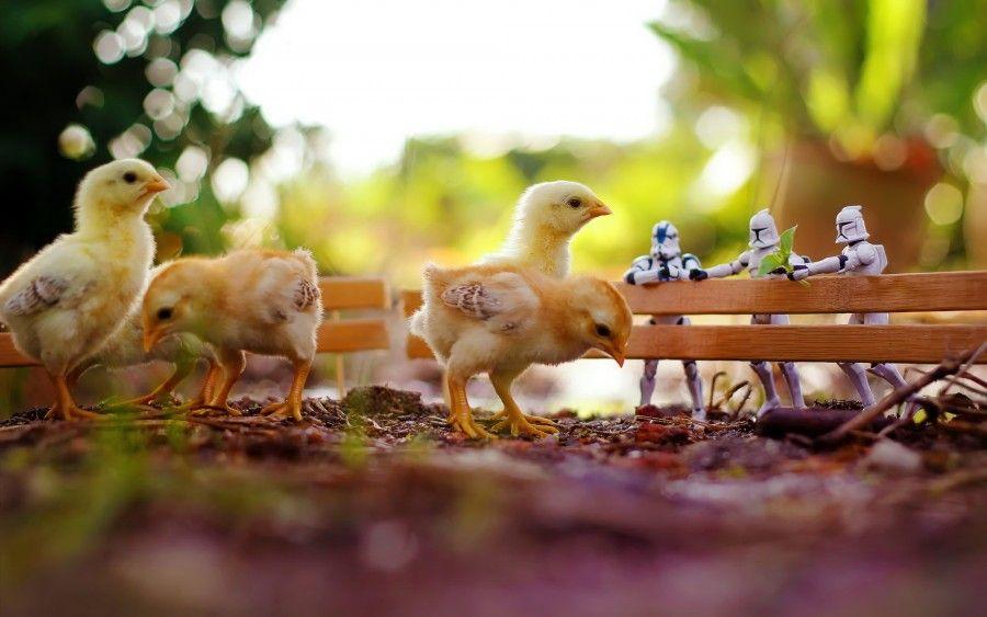 chickens-star_wars-macro-toys-zahir_batin