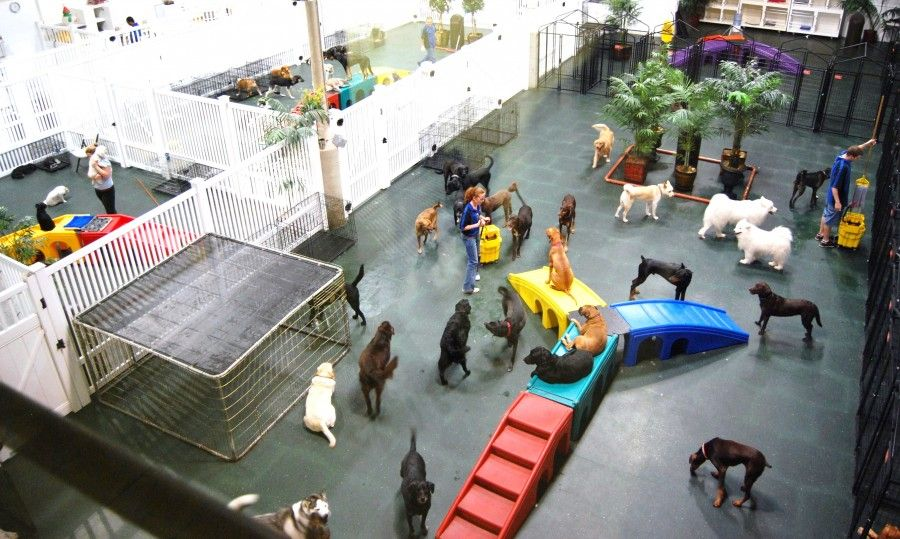 Day Boarding For Dogs Newcastle