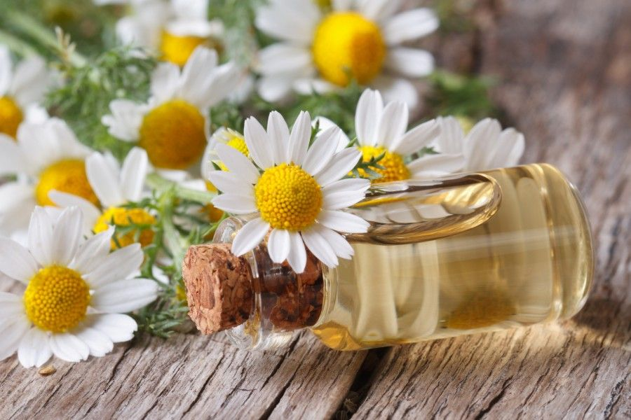 oil in a glass bottle on the background of camomile flowers