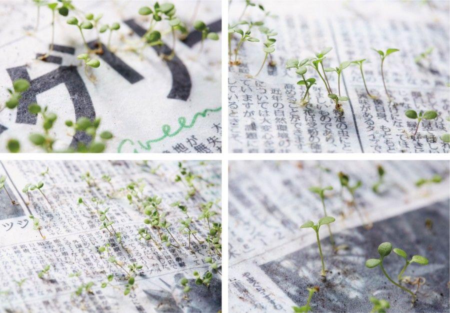 green-newspaper3