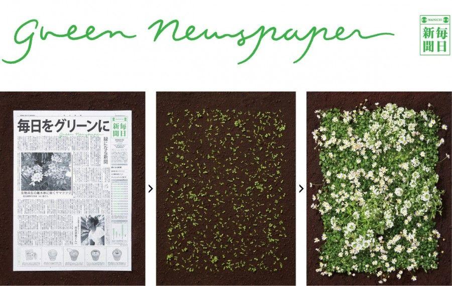 green-newspaper4