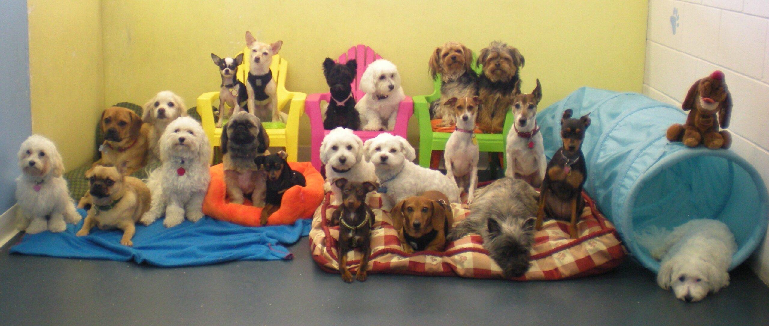 asili-per-cani