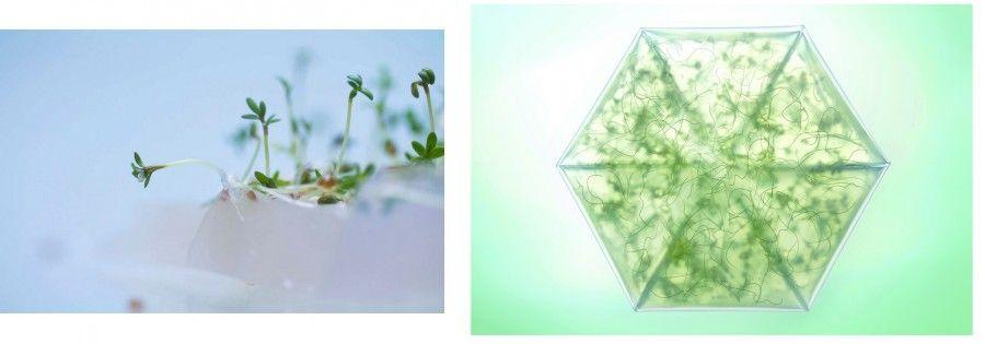 kit-giardinaggio-origami3