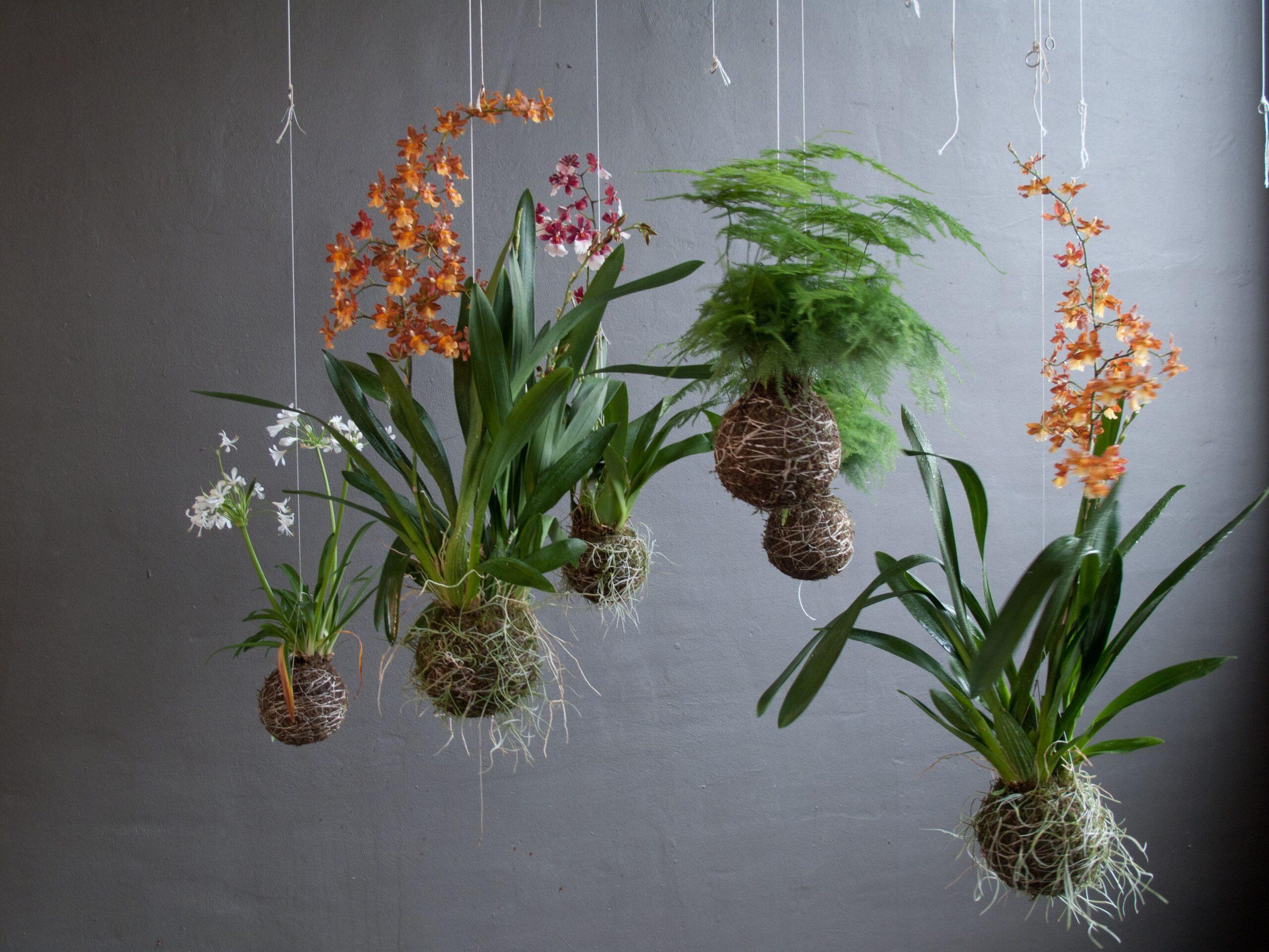 string-garden