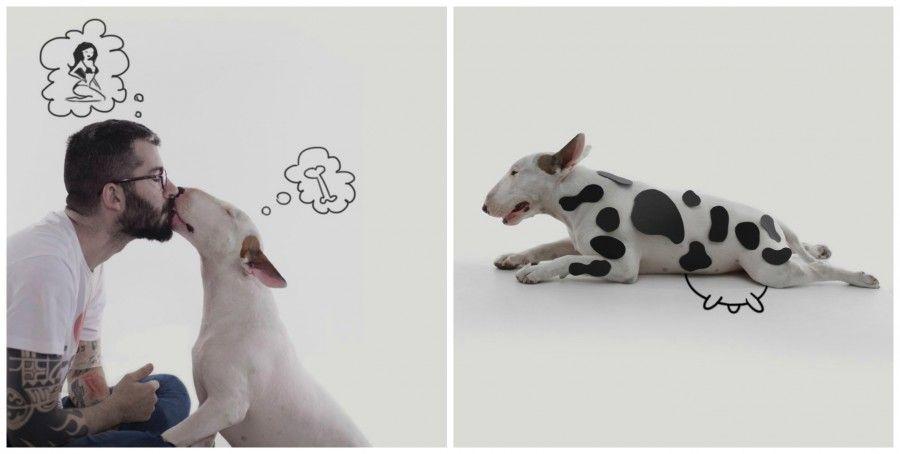 jimmy-choo-bull-terrier-super-star