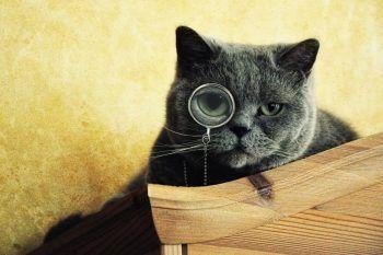 Solo chi ha un gatto può capire