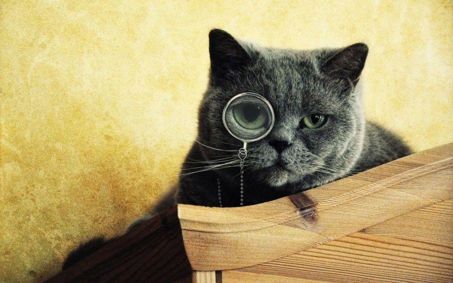 gatto-intelligente