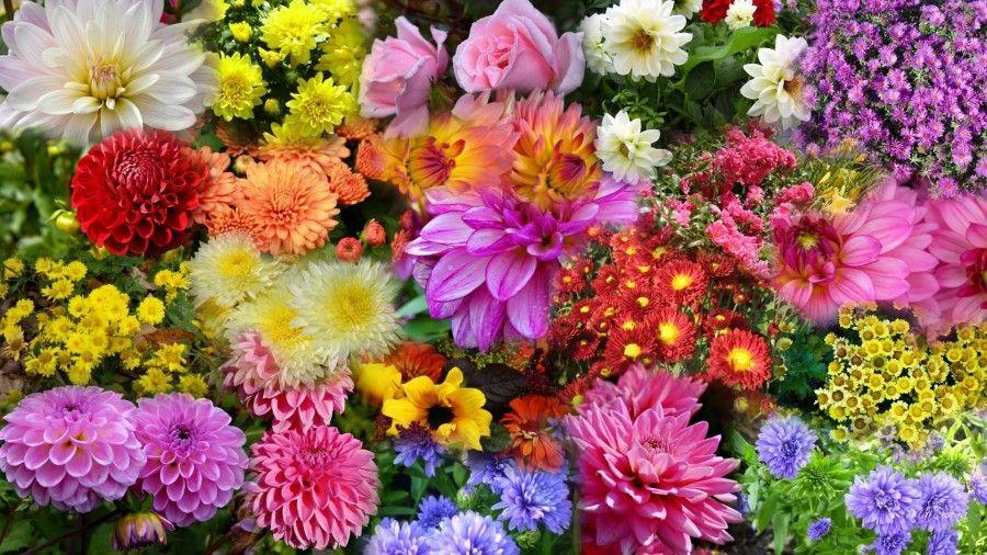 giardino-ottobre-fiori