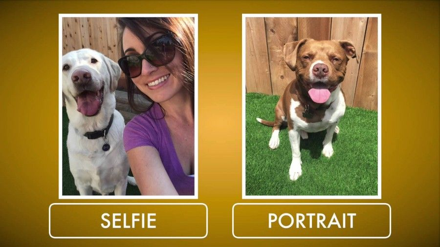 pooch-selfie1