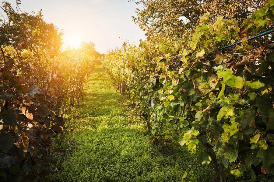 Weekend autunno in francia:strade del vino