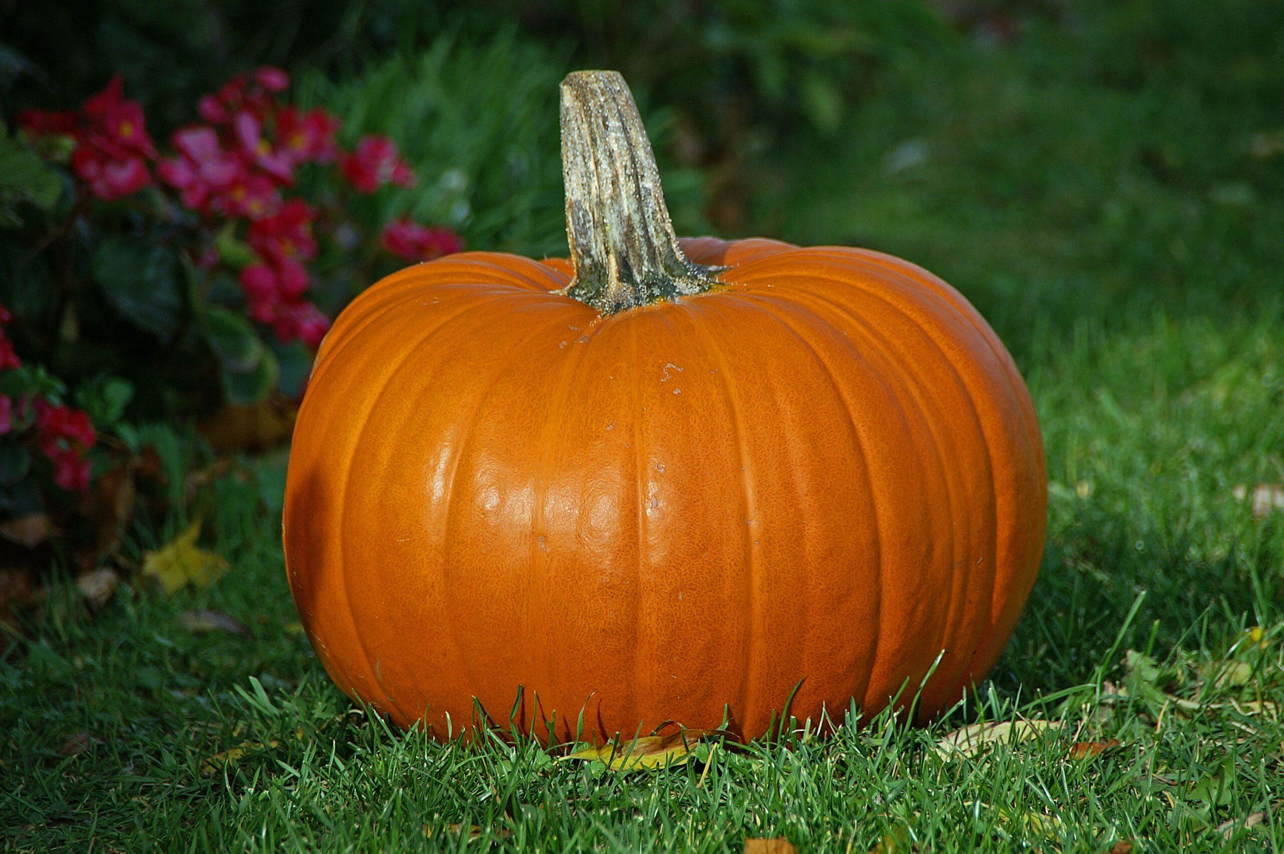 5 modi per riciclare la zucca di Halloween