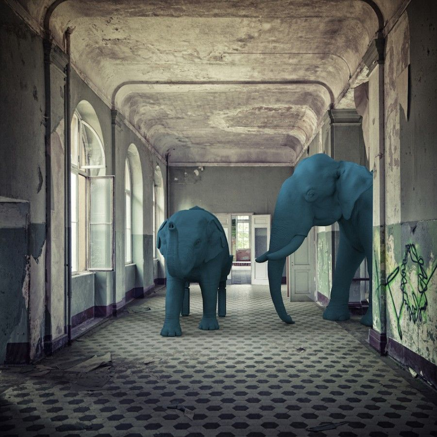 Elephants-reception-hallway