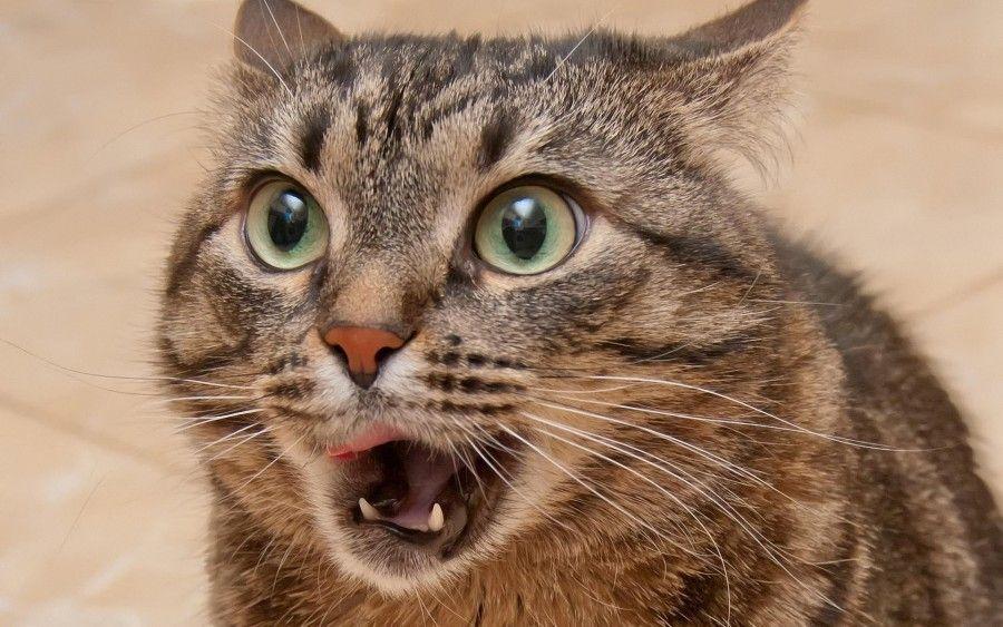 gatti spaventati dai cetrioli