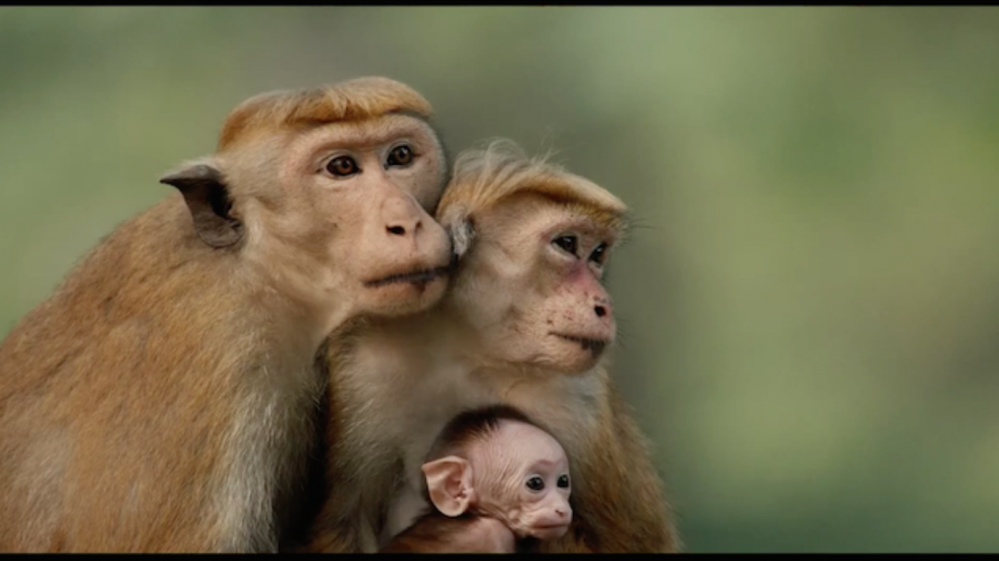 Una scena da Monkey Kingdom