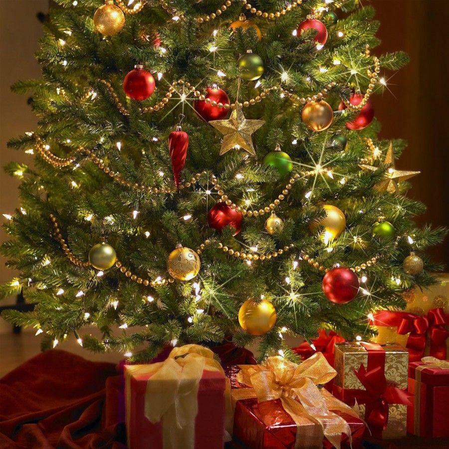 Albero di Natale vero o finto?