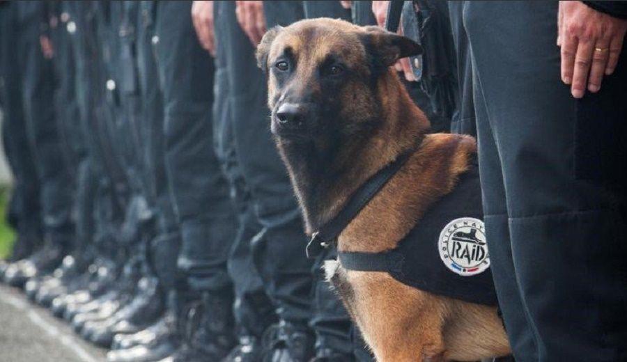 diesel-cane-poliziotto