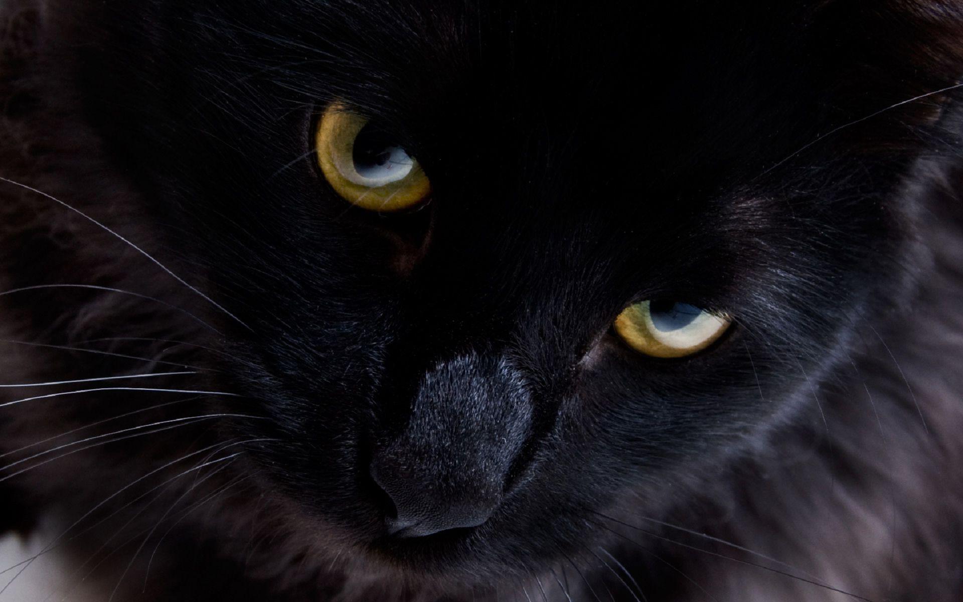 gatto-nero2