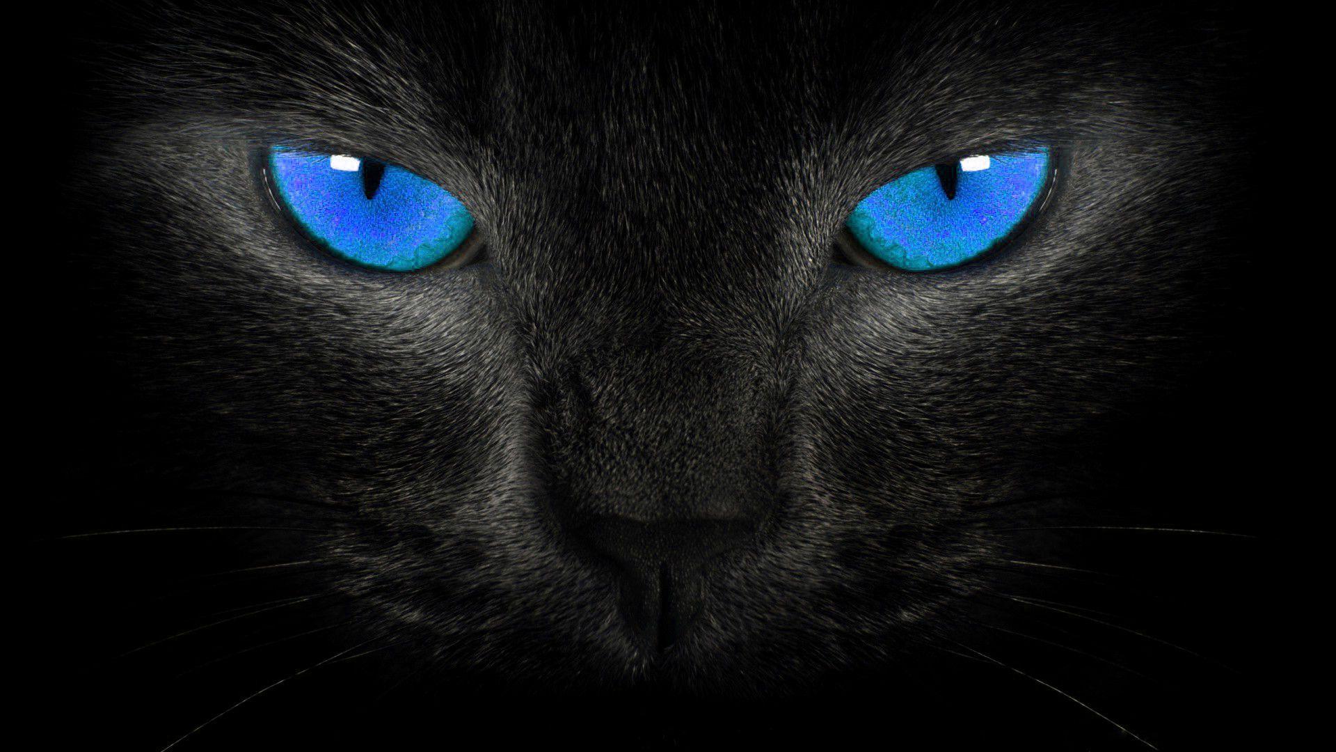 gatto-nero3